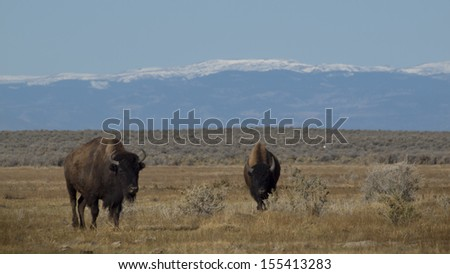 The high desert grasslands, alpine forests, wetlands, sand dunes, creeks and lush meadows offer one of the most scenic and ecologically diverse landscapes for bison ranch. - stock photo