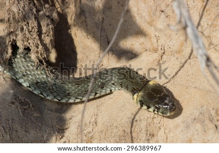 The hole in the sand where they live snake - stock photo