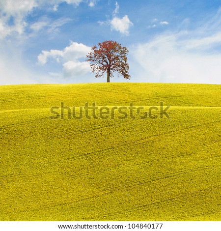 The hope, a conceptual background in a rural environment with a tree at horizon over a blue cloudy sky with white clouds, a field of yellow flowers in spring or summer ideal for agriculture or farming - stock photo