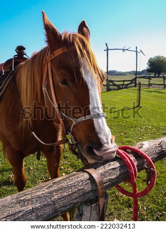 The horse is making a funny face - stock photo