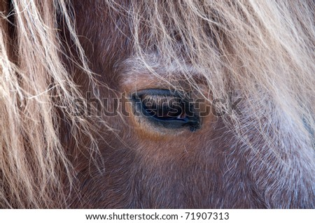 The horse looks sad. Eye of a horse. - stock photo