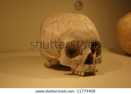 The human scull - stock photo