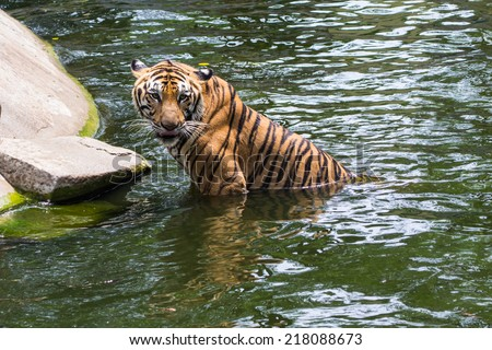 The hunter animal in a wild - stock photo