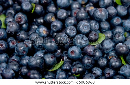 The image of Bilberry on a white background - stock photo