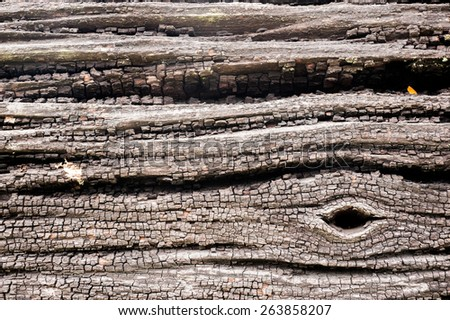 the image of the wood texture - stock photo