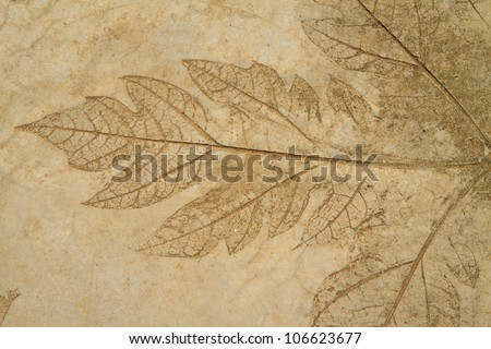 The Imprint of leaf on cement floor background - stock photo