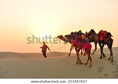 The indian man lead Camels while the sunset at the end of the day. - stock photo