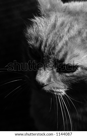 """The infamous """"bad kitty"""" takes a sitting sun bath in a corner of the room. - stock photo"""