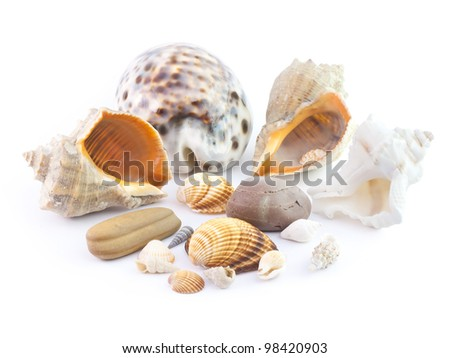 The isolated seashells on a white background - stock photo