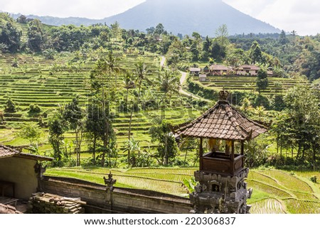 The Jatiluwih rice terraces in Bali, Indonesia - stock photo