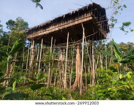 The jungle, Indonesia - January 15, 2015: Houses on the trees. That way Korowaya tribe builds houses in Papua - stock photo