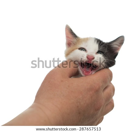 The kitten meows in a man's hand on a white background - stock photo