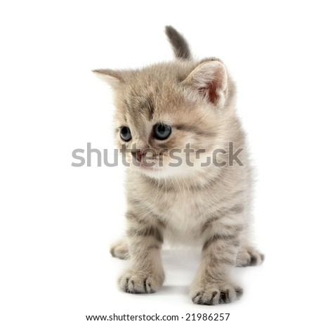 The kitten  on a white background - stock photo