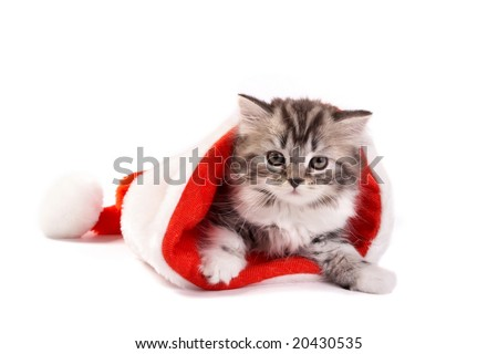 The kitten plays on a white background - stock photo