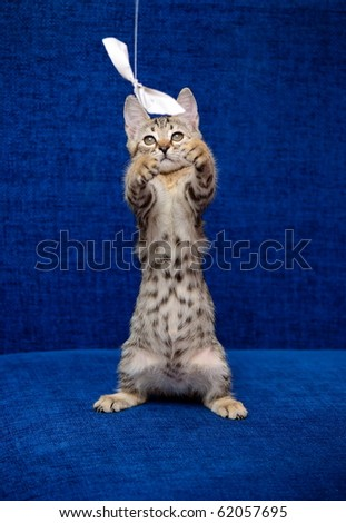 The kitten plays with a piece of paper a thread - stock photo