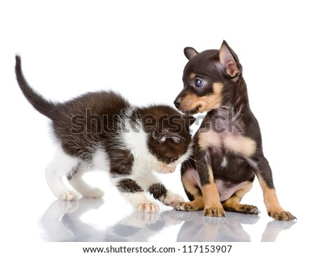 the kitten plays with a puppy. isolated on white background - stock photo