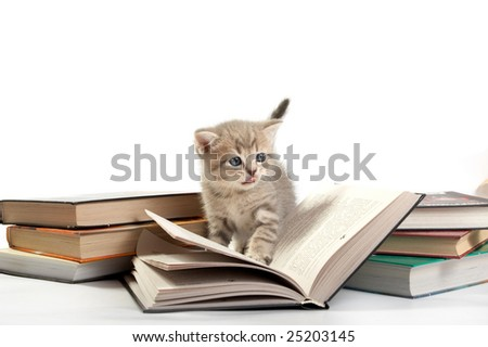 The kitten plays with the book - stock photo