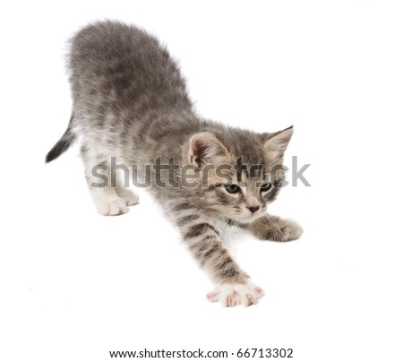 The kitten stretches against white background - stock photo