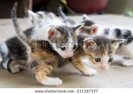 the kittens who were played among themselves. - stock photo