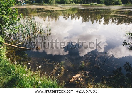 The lake shore with grass, flowers and seaweed. The water reflects the sky with clouds. - stock photo