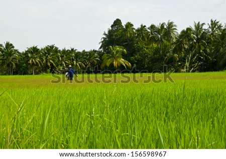 the landscape view of farm in thailand - stock photo