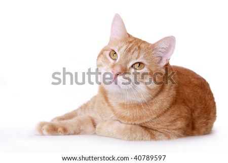 the lazy ginger cat overlies the white background - stock photo