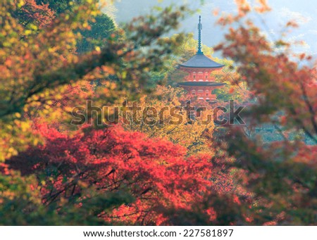 The leave change color of red at temple in Kyoto Japan. - stock photo