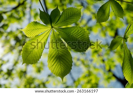 the leaves of the chestnut forest backdrop - stock photo