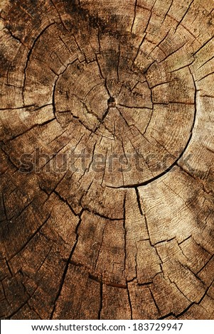 the line pattern on wood - stock photo