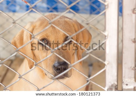 the little dog have fault is punish quarantine in the imprison - stock photo
