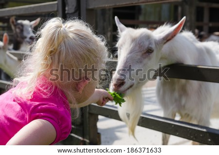 The little girl feeds goats on a farm - stock photo
