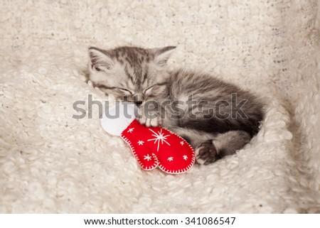 the little gray kitten sleeps also a mitten  - stock photo
