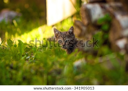 The little kitten cautiously peeking out of the grass. - stock photo