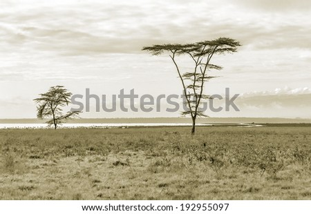 The lonely tree in Lake Nakuru National Park - Kenya, Eastern Africa (stylized retro) - stock photo