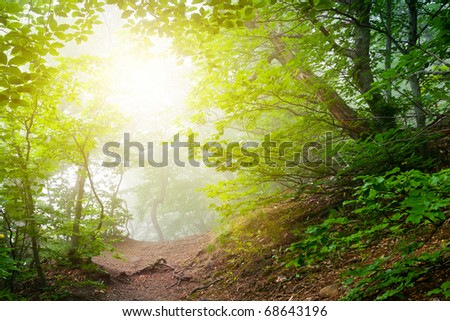 The magic forest in the early morning - stock photo