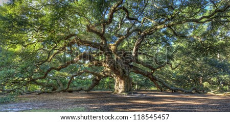 The Magical Angel Oak Tree in Charleston South Carolina - stock photo
