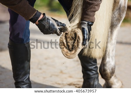 The man cleans a horse's hoof before the training - stock photo