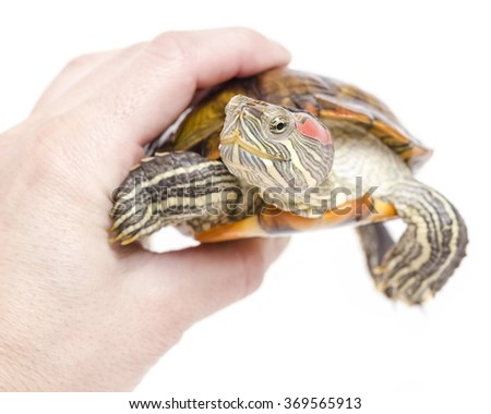 The man is holding pretty yellow-bellied sea turtle in hand - stock photo