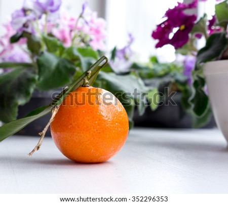 The mandarin. - stock photo