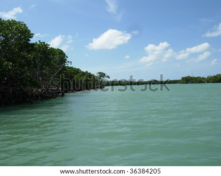The Mangrove Forest in the Florida Keys - stock photo