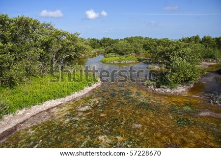 The Mangroves of Everglades National Park, Florida - stock photo