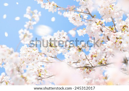 The material of a cherry tree - stock photo