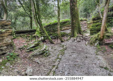 The Maze - tectonic fault formed 20 million years ago, popular mountain tourist route in Yew-tree grove in Caucasian biosphere reserve, Khosta district of Sochi, Krasnodar Krai of Russia - stock photo
