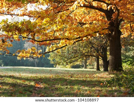 The mighty oaks in the autumn meadow - stock photo