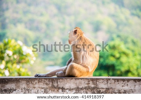 The monkey is sitting on blur green nature background - stock photo
