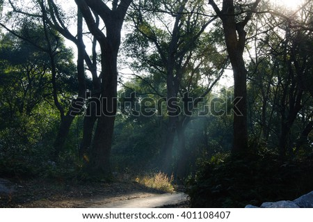 The morning sunlight in the forest - stock photo