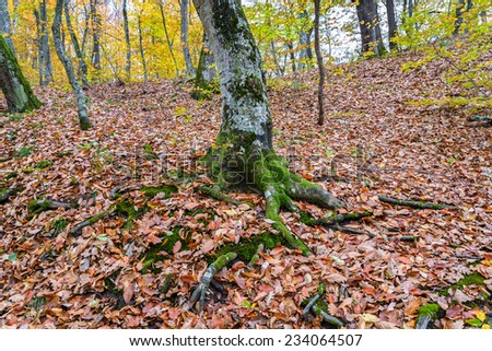 The moss on the roots of a tree - stock photo