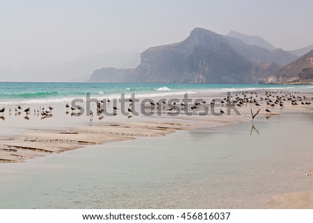 the mountain and sea seagull full  in oman coastline of salalah  - stock photo