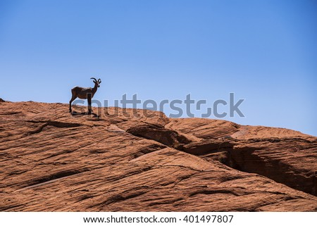 The mountain goats at Valley of Fire - stock photo