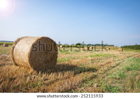 The Mown wheat and straw in a field - stock photo